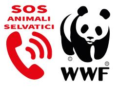 SOS animali selvatici feriti o in difficoltà - Segnalazione cani vaganti