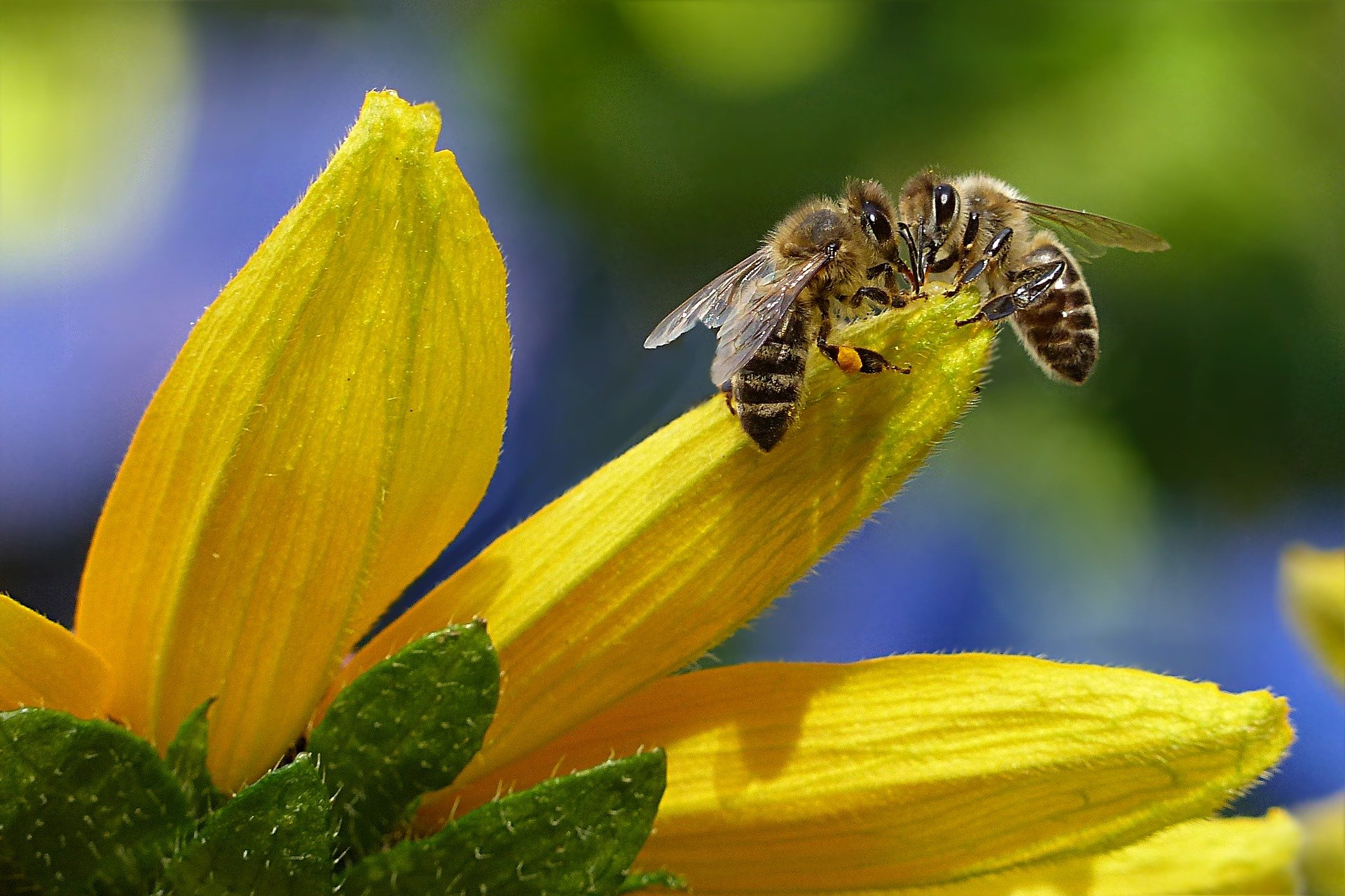 20 maggio: giornata mondiale delle api